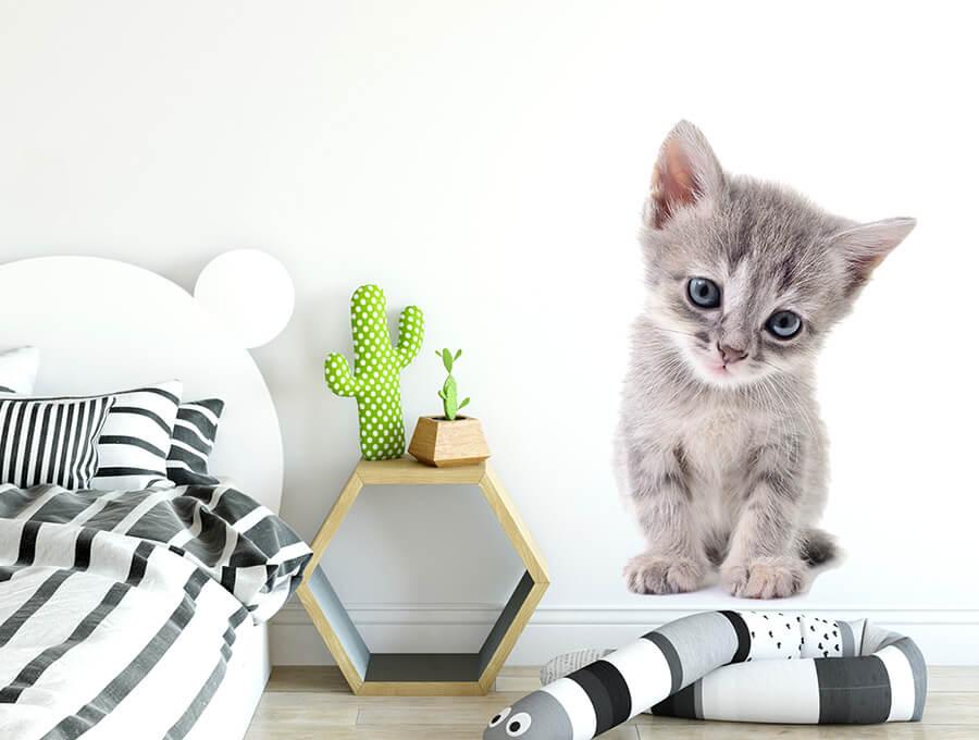 Seinakleebis kassipoeg